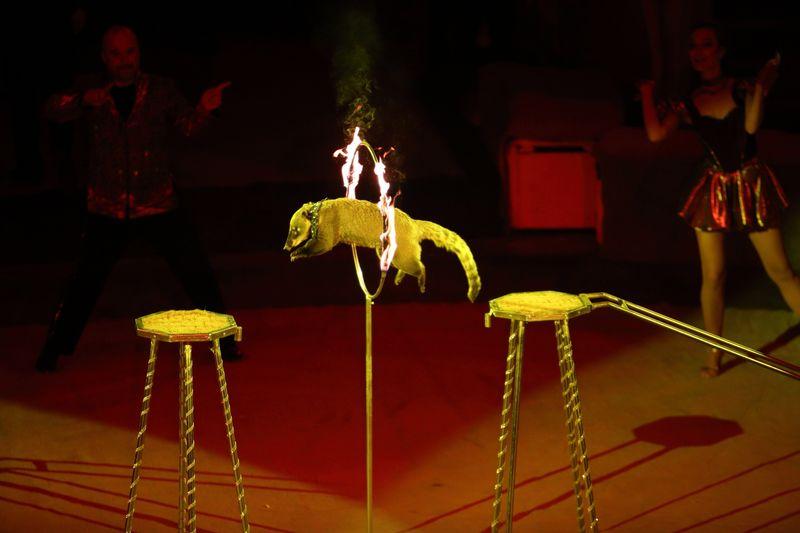 Носуха прыгает через огонь, программа «Амазонки»
