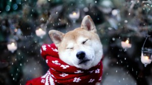 dog-snow-wallpaper-1