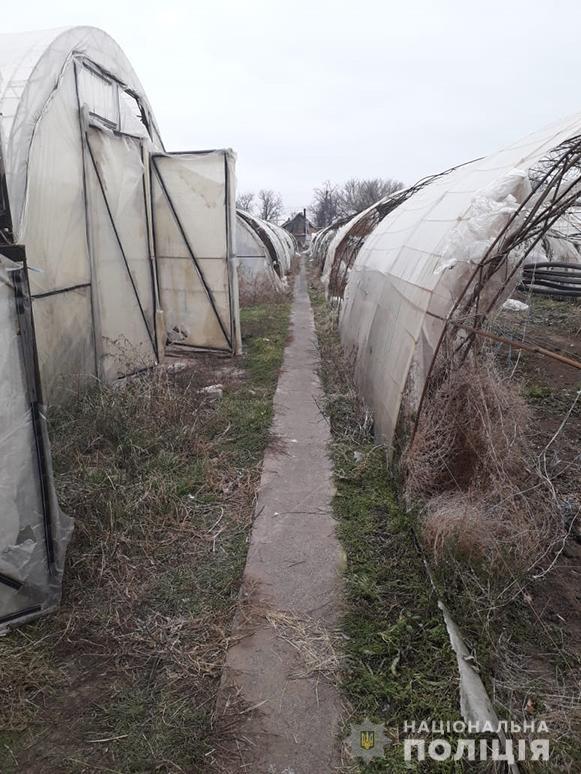 В Запорожской области выявили плантацию марихуаны
