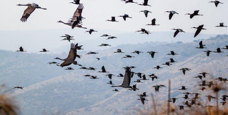 Летят перелетные птицы - а я не хочу улетать!