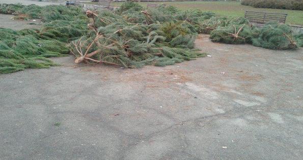 В Запорожской области начали продавать новогодние елки – Индустриалка