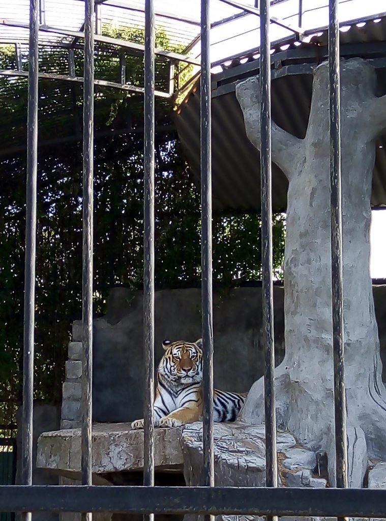 зоопарк в Васильевке