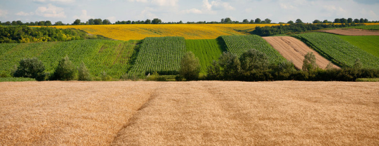 В Запорожской области фермеры незаконно обрабатывали 50 гектаров земли