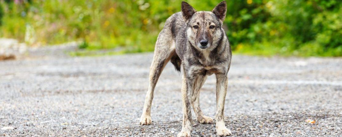 В Запорожье массово стерилизуют и прививают бездомных животных – Индустриалка
