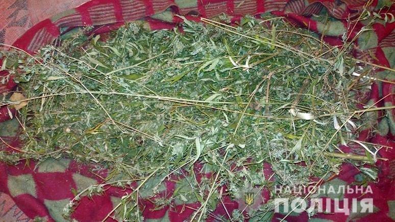 В Запорожье полицейские изъяли у местного жителя марихуану стоимостью более 100 тысяч гривен
