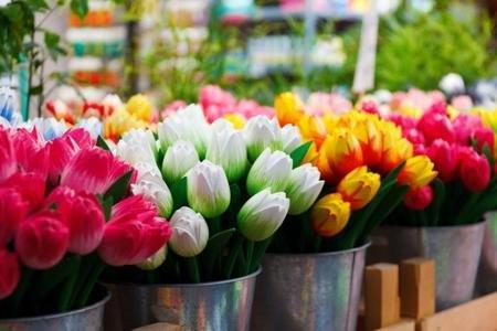 В Запорожье появится временный коммунальный рынок по продаже цветов