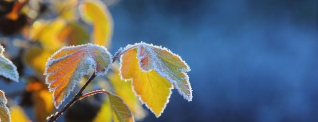 В Запорожье прогнозируют снижение температуры воздуха