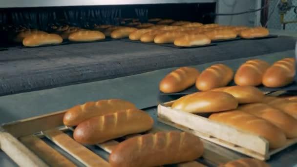 В Запорожье рабочие, доставляя хлеб в магазины, складывают его на землю (Фото)
