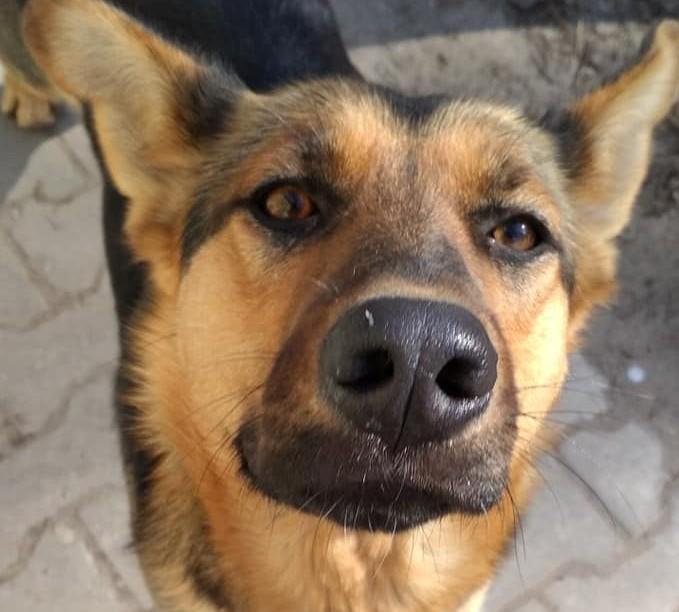 В Запорожье хозяйка хочет пристрелить свою собаку: животное ищет новый дом (ФОТО)