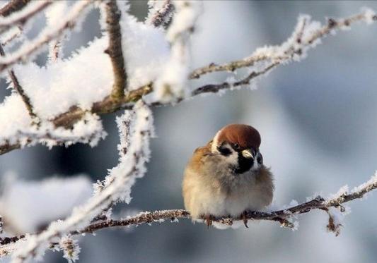 Говорят синоптики: в конце недели в Украине потеплеет