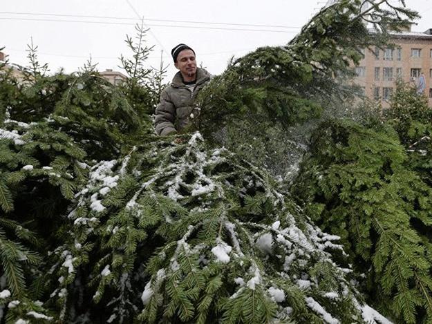 Готовь кошелек: стало известно, по какой цене будут продавать деревья на елочных базарах