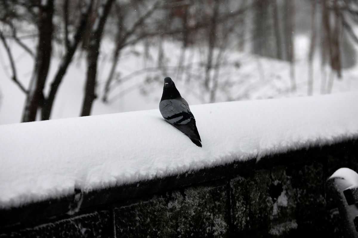 ГУ ГСЧС: 1 декабря погода в Запорожье и области может существенно ухудшиться