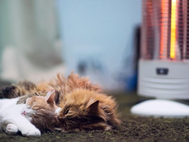 Доставай обогреватель: в Шевченковском районе отключили отопление
