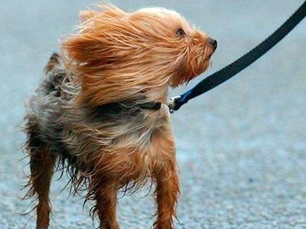 Запорожье поштормит: синоптики обещают сильный ветер