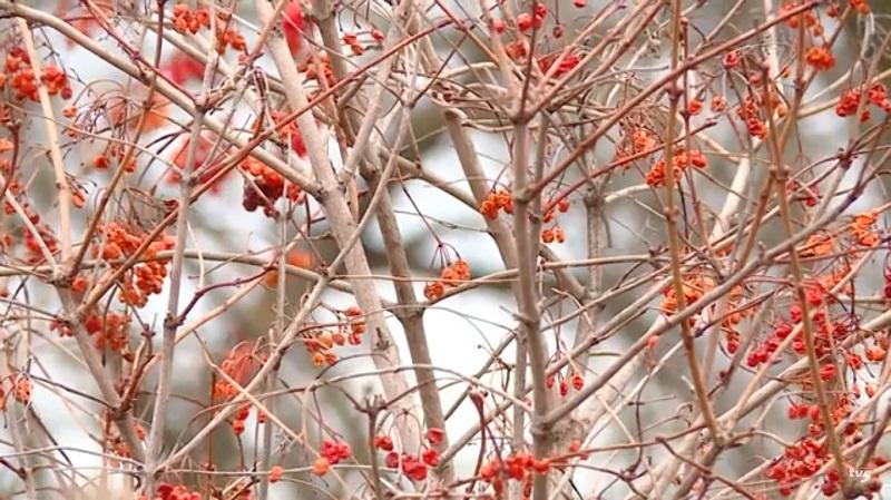 Запорізькі медики висадили саджанці дерев на території національного заповідника «Хортиця»