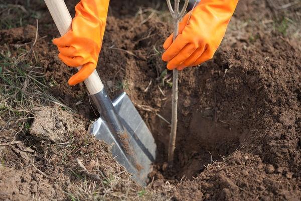 Защита экологии или пиар: зачем высаживали деревья в замершую землю
