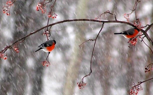 Зима приближается: какая погода сегодня в Запорожье