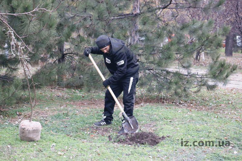 В Днепровском районе Запорожья высадили более 50 акаций