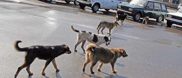 На запорожском курорте выделили дополнительные деньги на отлов бродячих собак