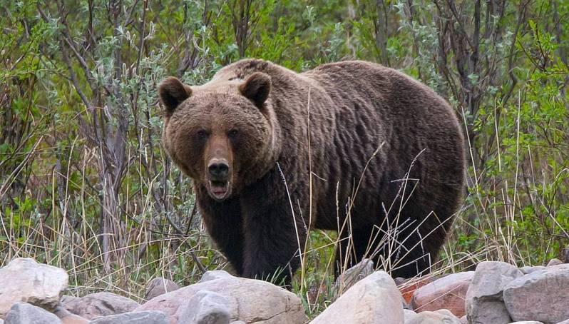 На Харьковщине медведь напал на сотрудницу базы отдыха – женщина в больнице