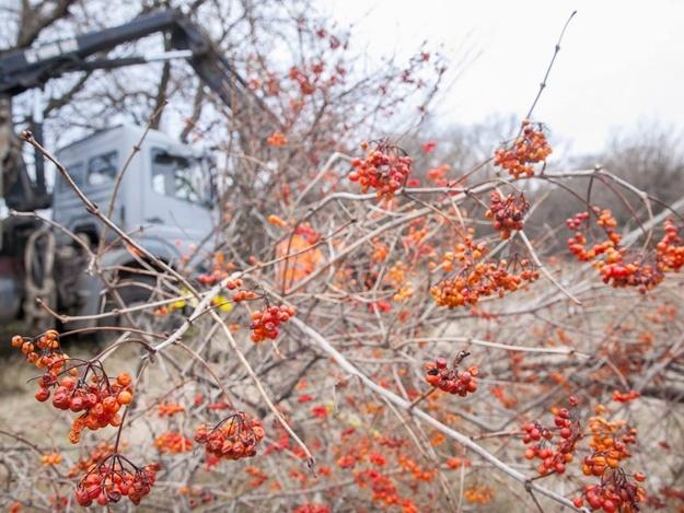 Посадили 30 деревьев: на Хортице появилась аллея врачей