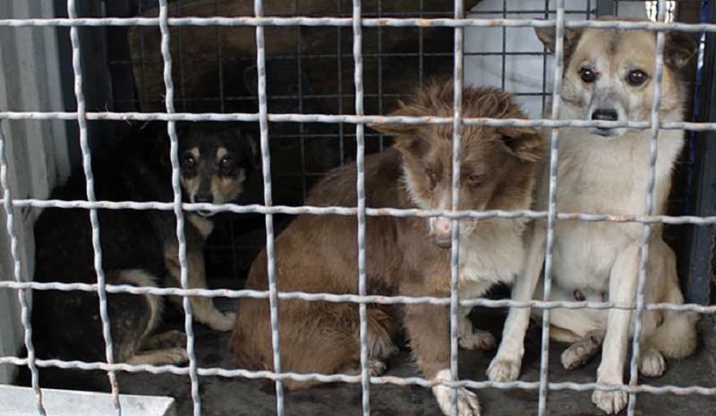 Підсумки року: про стерилізацію бездомних тварин у Запоріжжі