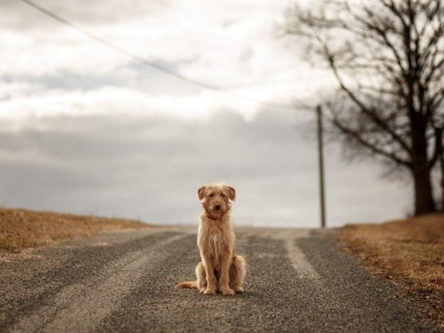 Сбил и уехал: на проспекте Соборном водитель маршрутки оставил собаку умирать (ВИДЕО)
