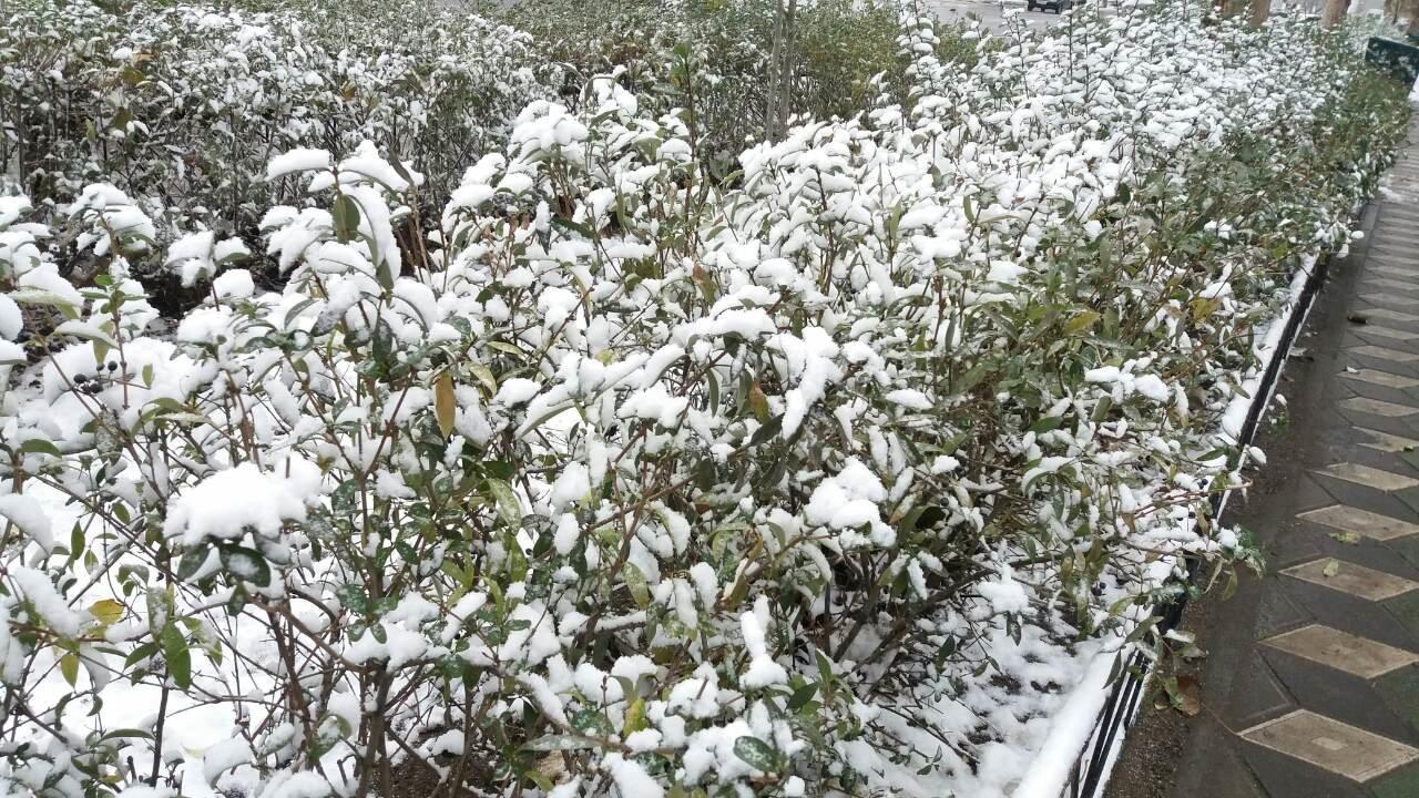 Сегодня в Мелитополе выпал первый снег