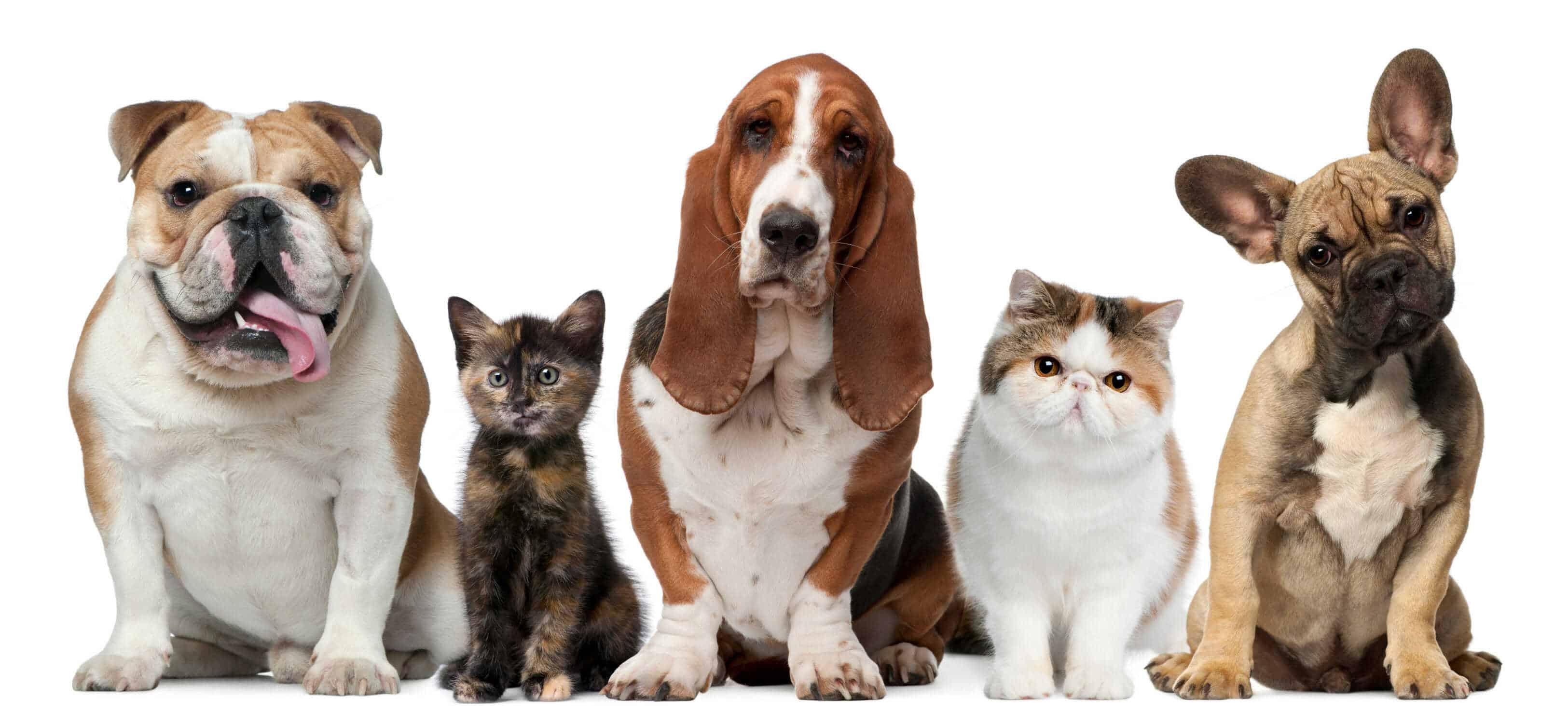 Сегодня отмечают Всемирный день домашних животных