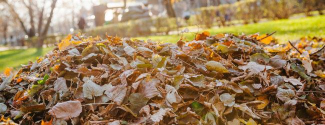 Советы запорожцам: куда жаловаться на неубранную листву
