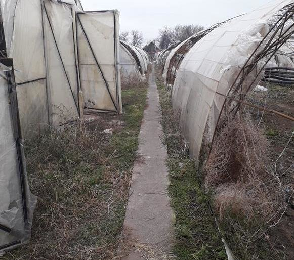 У жителя Каменско-Днепровского района изъяли марихуану на более, чем полмиллиона гривен