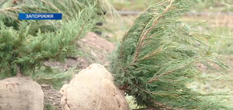 У Заводському районі працівники КП «Зеленбуд» висадили понад 200 кущів