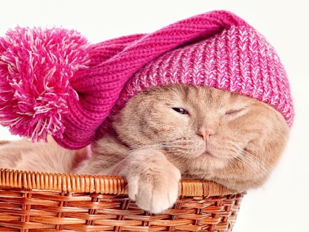 Утепляйся: какая погода сегодня в Запорожье