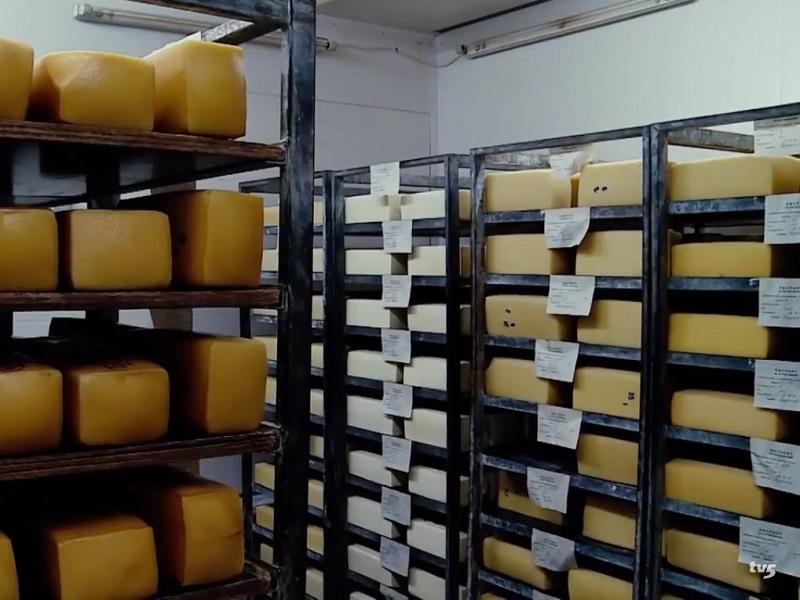 Як працює виробництво молочної продукції у Запоріжжі?