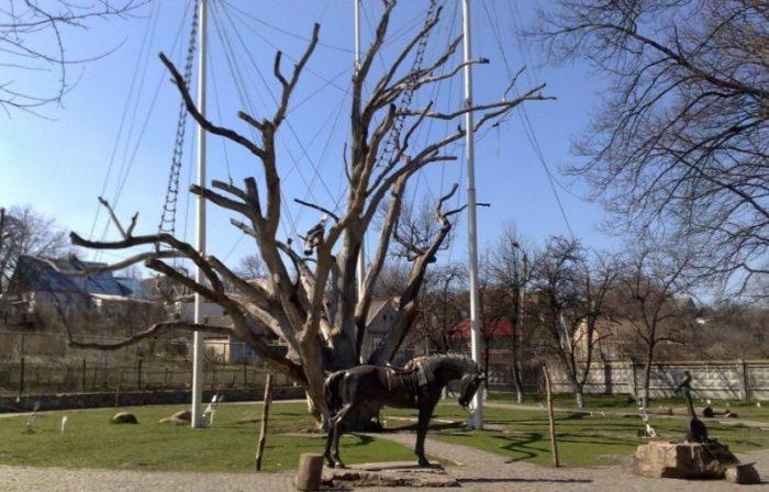 Как менялся легендарный Запорожский дуб за последние 113 лет (Видео)