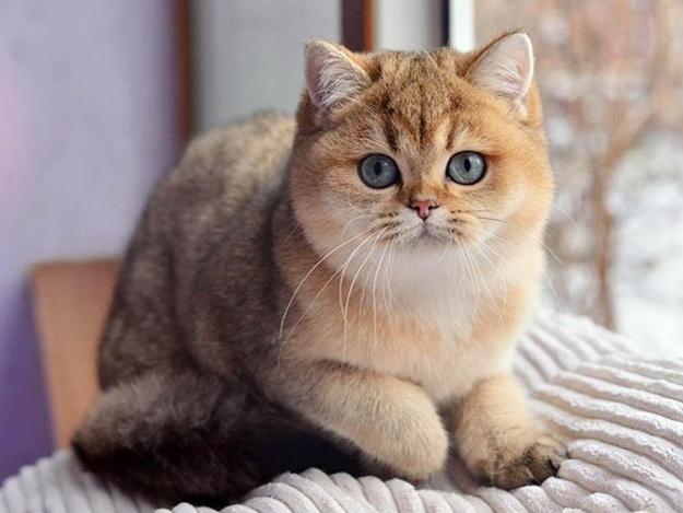 Must-visit: в Киеве пройдет международная выставка котов