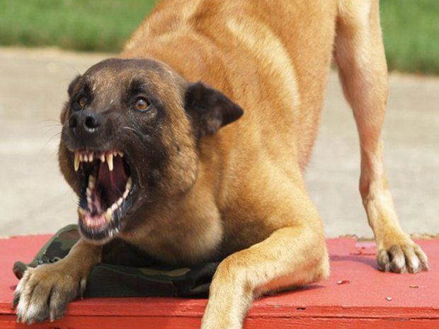 В Бердянске собака набросилась на школьника