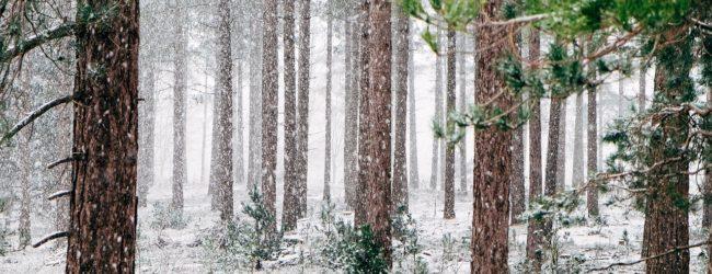 В Запорожье ожидаются сильные порывы ветра и осадки