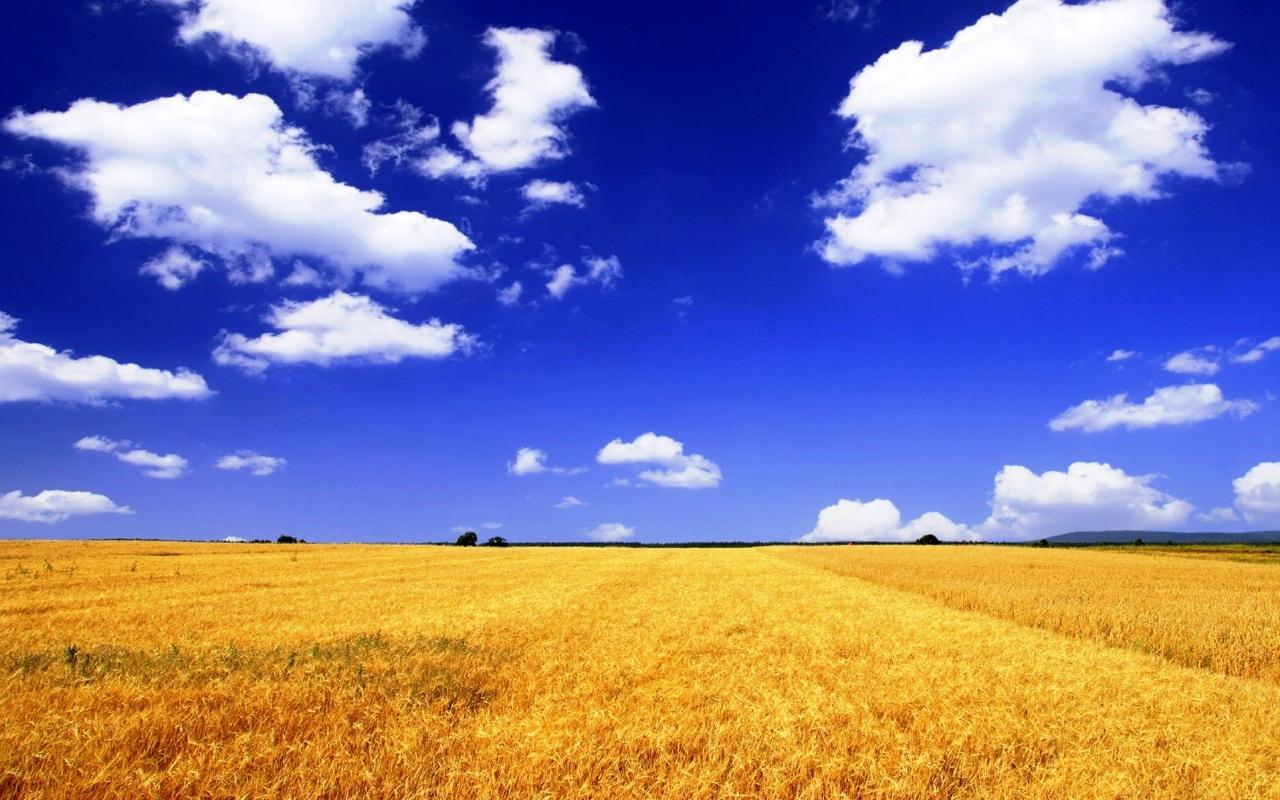 В Раду внесли пять законопроектов о продолжении моратория на продажу земли