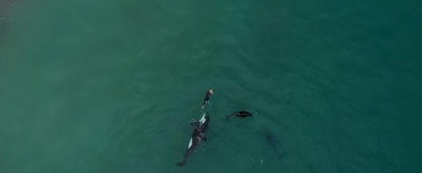 Видео дня: семья косаток поплавала с пловчихой