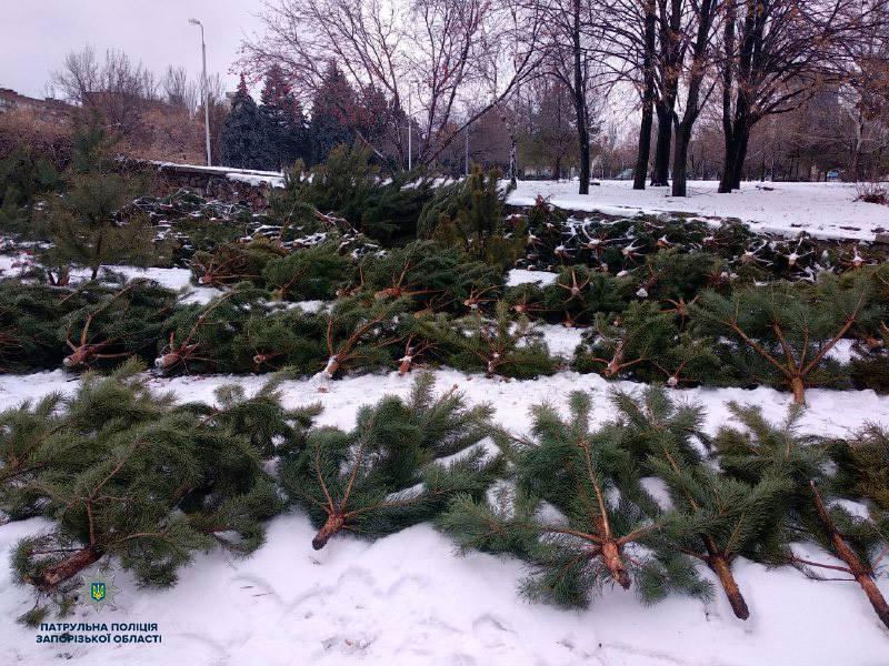 незаконная торговля елками