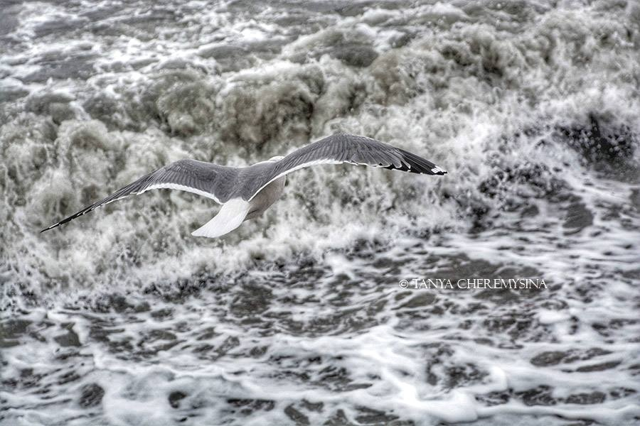 Фото Азовского моря