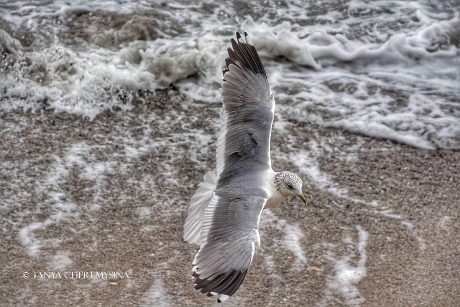 Чайки обеспокоены сильным ветром