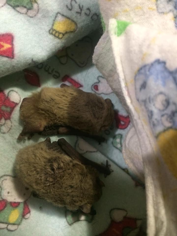 В запорожскую многоэтажку наведались летучие мыши