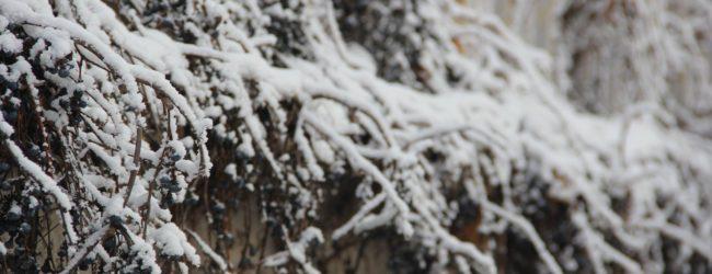 В Запорожье продержится низкая температура и туманность