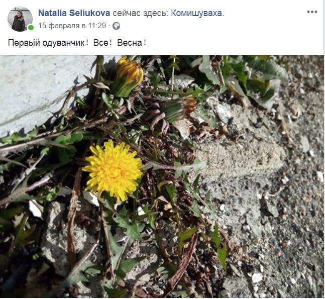 расцветают одуванчики