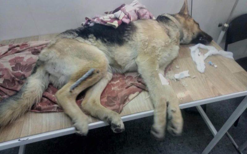В Запорожье породистого пса отравили и вывезли на трассу умирать