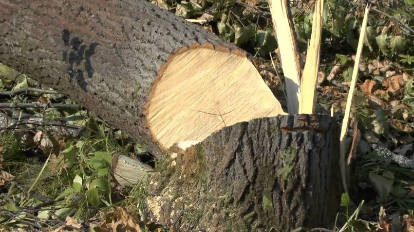Запорожский комбинат просит согласовать вырубку деревьев в Заводском районе