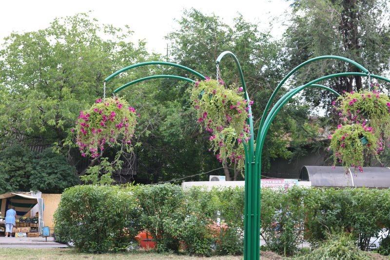 Клумбы на улице Иванова. Красивые цветы там растут только в теплое время года | Индустриалка