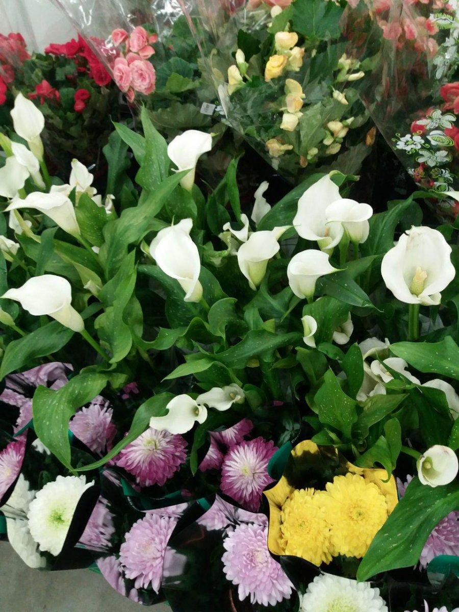 Цветы чайковский, цветы запорожье цены